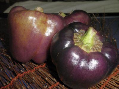 紫ピーマン.jpg