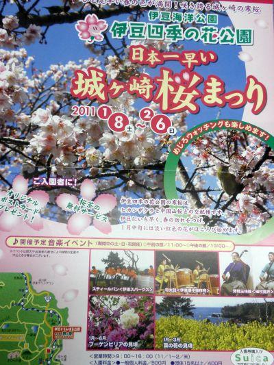 城が崎の桜まつり.jpg