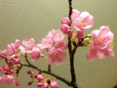 早咲きの早咲き寒桜.jpg