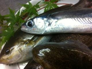 6・3朝捕れ地魚.jpg