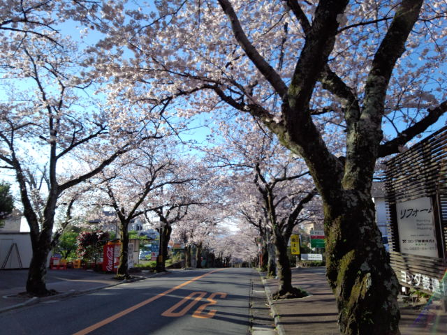 2014桜並木.jpg