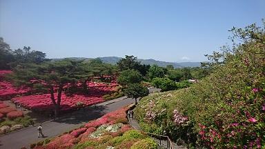 ツツジと富士山.JPG