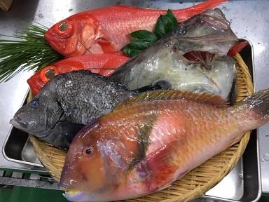 地魚(3月).JPG