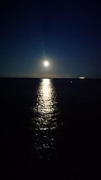 月明り.JPG